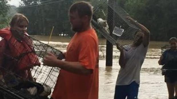 Empleados y voluntarios rescatan a animales de un refugio inundado