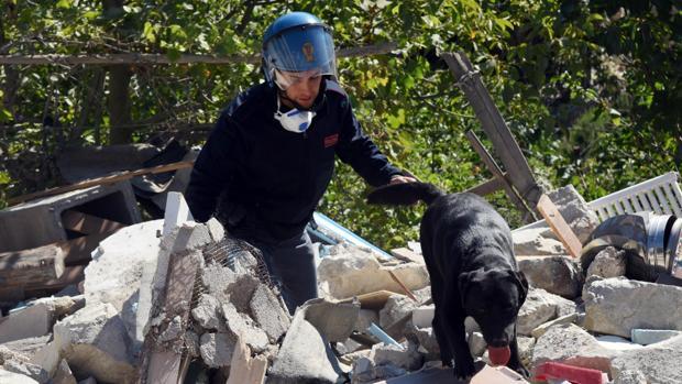 Un policía y su perro trabajan entre los escombros de un edificio derrumbado en Pescara del Tronto