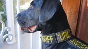 URL, el perro policía que descubre los archivos porno