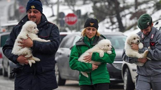 Miembros del equipo de rescate muestran tres cachorros de perro rescatados de entre las ruinas del hotel Rigopiano