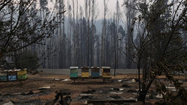 Santa Olga, el pueblo que han devorado las llamas en la ola de incendios que asola Chile
