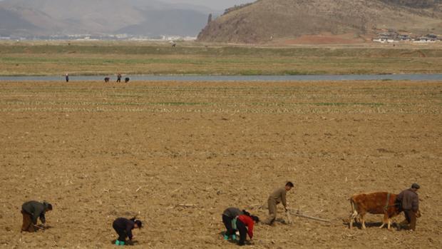 La ONU alerta de que dos de cada cinco norcoreanos sufren desnutrición