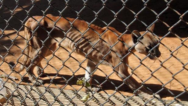Hasta los animales se mueren de hambre en los zoológicos de Venezuela
