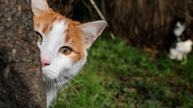 Desvelan la identidad del misterioso asesino en serie de gatos de Londres