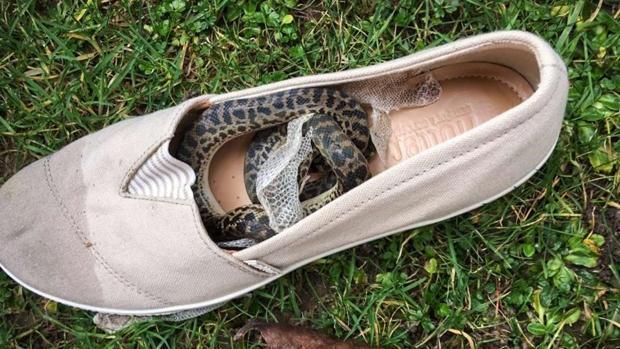 La serpiente hallada en el zapato
