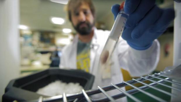 Uno de los investigadores del CNIO manipula una muestra de un tumor