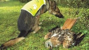 Conoce a Lobo y Cleo, el veterano y la estrella de la Unidad Canina que lucha contra el veneno