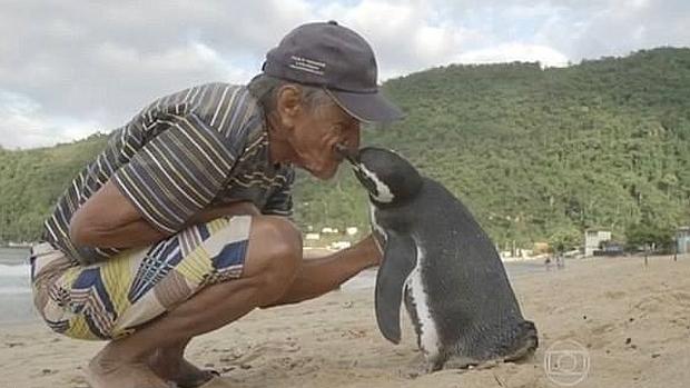 Pingüino se hace amigo de un hombre