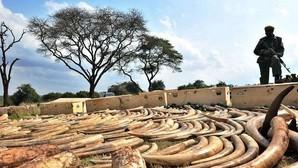 China prohibirá la importación de marfil y de productos que contengan esta sustancia adquiridos antes de 1975