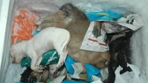 El uso ilegal de veneno podría haber costado la vida a 185.000 animales