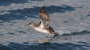 España es el país con mayor diversidad de aves marinas de la Unión Europea