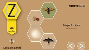 ¿Y si fueras una abeja melífera?