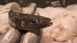 Un tercio de los peces con valor comercial se capturan a un nivel biológicamente insostenible