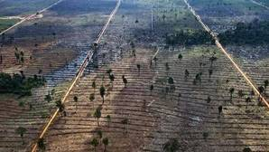 El auge del aceite de palma amenaza al 42% de las especies endémicas del sudeste asiático