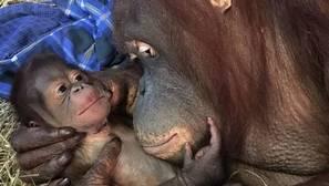 Batang y su cría, que es un macho que nació el 12 de septiembre