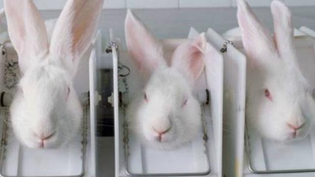 El 76,5% de los taiwaneses considera que los animales «no deben sufrir en nombre de la belleza»