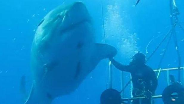 tiburon-blanco-choca-cinco_xoptimizadax-kVtF--620x349@abc Medica En Blanco on