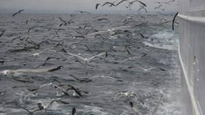 Acabar con los descartes de pesca dispararía la mortalidad de aves marinas