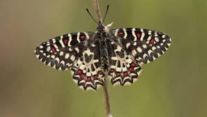 Más del 50% de la información científica sobre biodiversidad procede de los ciudadanos