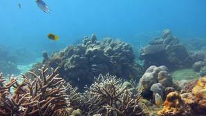 Los arrecifes comenzarán a sufrir el blanqueamiento anual en 2043