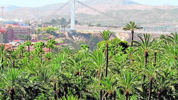 La Unesco declaró el Palmeral de Elche Patrimonio de la Humanidad en el año 2000