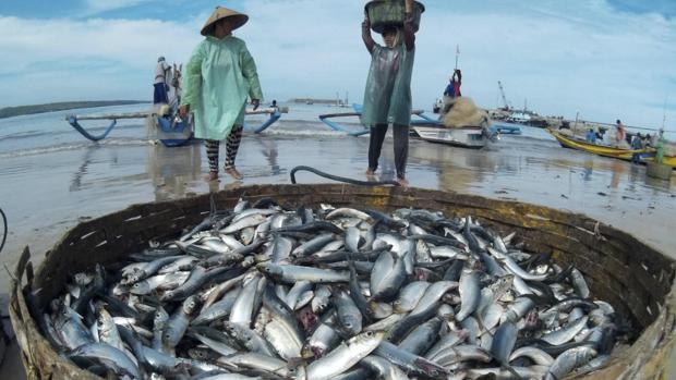 Una escasez en la pesca marina sería una catástrofe para las 800 millones de personas que dependen del pescado como fuente principal de alimento