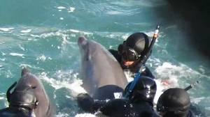 Vídeo: Un delfín intenta desesperadamente salvar a su cría de un grupo de cazadores