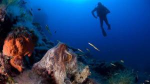 Los 11 paisajes submarinos únicos que alberga Cabrera