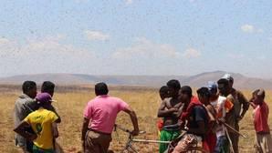 La organización de las Naciones Unidas para la Alimentación y la Agricultura ha desarrollado varias herramientas para una detección temprana de las plagas
