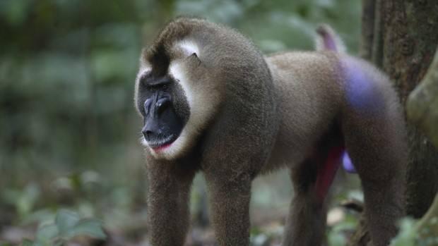 Actualmente, la UICN considera que sólo un 7% de los mamíferos y un 4% de la Lista Roja de Especies Amenazadas muestran una respuesta negativa al cambio climático