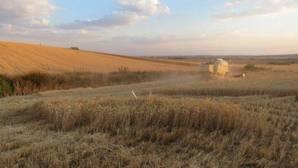 La etapa del sistema alimentario más ineficiente es la ganadería