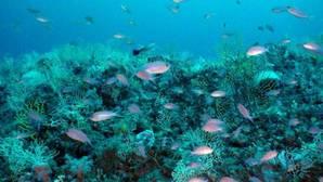 La pesca y el aumento de la temperatura están dañando la biodiversidad de las aguas del Pacífico, Atlántico e Índico