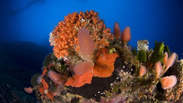 En los fondos abisales del cañón submarino de Avilés habría especies nuevas de corales, esponjas y crustáceos