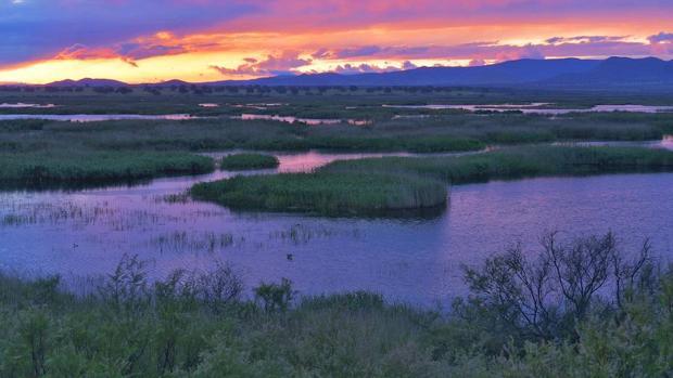 Hay 469 Áreas Importantes para las Aves en España. Y 50 de ellas, están amenazadas por las aguas residuales