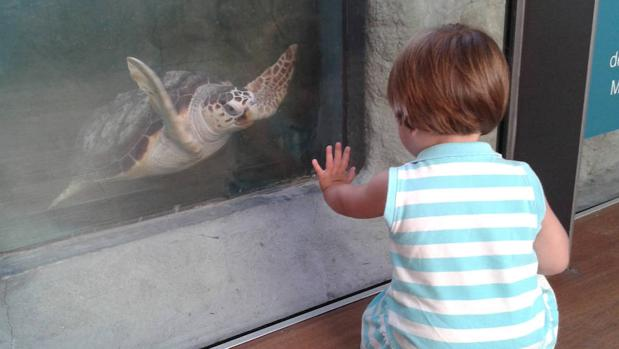 Las tortugas suelen ingerir el plástico presente en los océanos