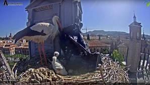 El viento se llevó la bolsa de plástico el mismo día que la pareja de cigüeñas lo subió a su nido