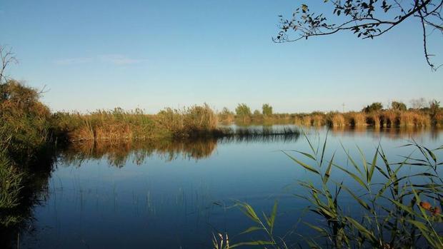 El Marjal de Almenara es el humedal de mayor extensión (1.550 hectáreas) de la provincia de Castellón