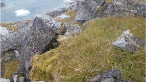 Una investigación del MNCN predice los niveles de peligro medioambiental que supone la expansión de pastos europeos en la Antártida
