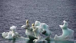 Los resultados obtenidos muestran que la concentración de mercurio ha disminuido en osos polares adultos un 13% cada año durante el periodo 2004-2011