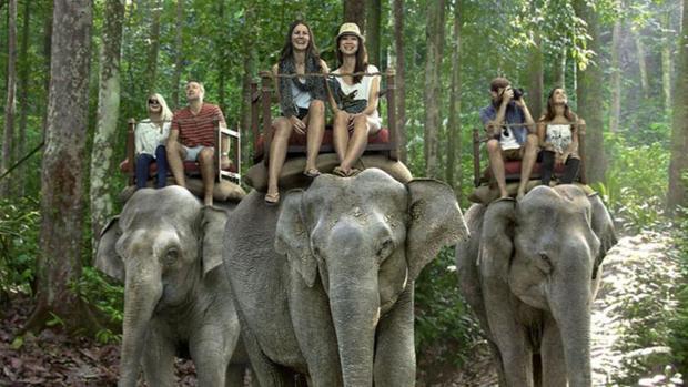 Tailandia es el país donde más ha florecido la industria del turismo relacionada con el elefante