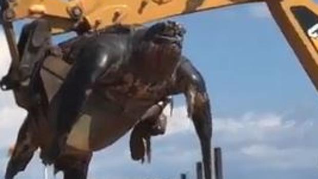 Encuentran una tortuga gigante en una playa de Barcelona