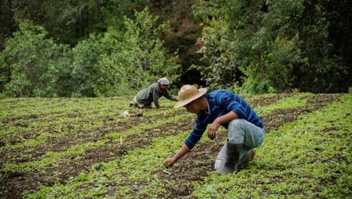 2019 marcará el comienzo del Decenio de la Agricultura Familiar
