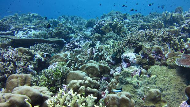 La Gran Barrera de Coral es un arrecife que se extiende a lo largo de unos 2.300 kilómetros al noreste de Australia