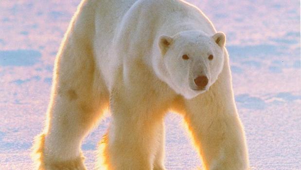 Aún quedan 303 especies de mamíferos por descubrir