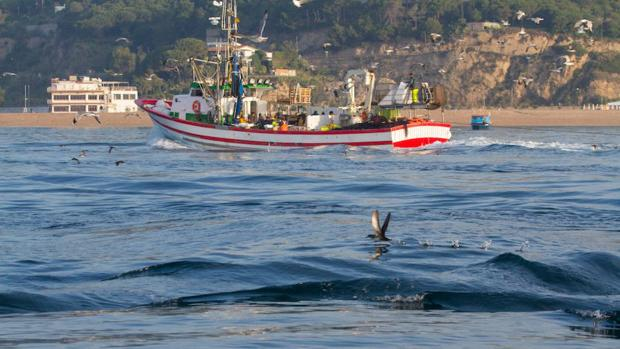 Así se combate la captura accidental de aves marinas en el mar Balear