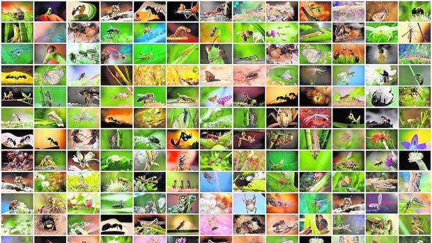 La CE lidera una iniciativa para proteger a los insectos polinizadores