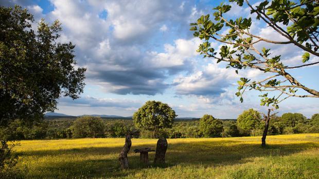 Reservas para insectos: dónde están y por qué son importantes