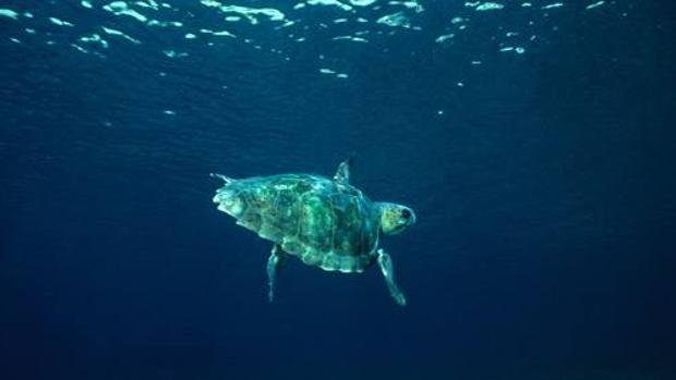 España ya salvaguarda cerca del 13% de sus aguas marinas