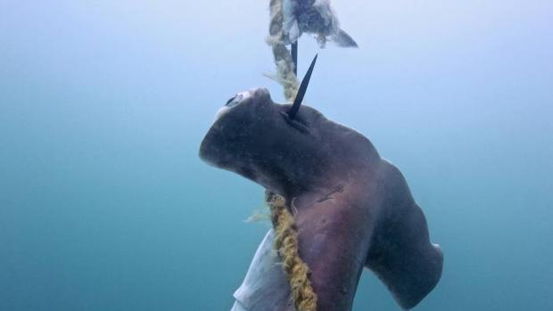 El, literalmente, desgrarrador coste que está teniendo el control de tiburones en la Gran Barrera de Coral