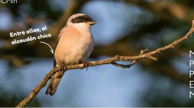 Las seis especies cuya protección acaba de reforzar el Gobierno